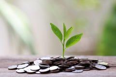 Сложите серебряную монету и treetop растя на деревянных поле и colorfu Стоковые Фотографии RF