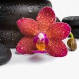 Сложите черные камни Дзэн и красную орхидею, фаленопсис на белизне Стоковое Изображение RF