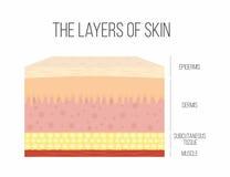Слои кожи Здоровая, нормальная человеческая кожа иллюстрация штока