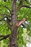 сломанная ветвь стоковая фотография