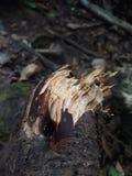 сломанная ветвь Стоковое Фото