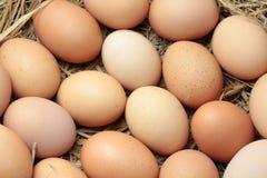 сломанные коробкой яичка яичка цыпленка внутри желтка Стоковое Изображение RF