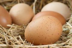 сломанные коробкой яичка яичка цыпленка внутри желтка Стоковая Фотография