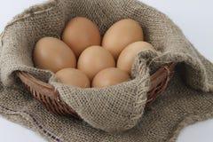 сломанный печь варящ живописание eggs неповрежденный прогресс некоторый поднос Стоковые Изображения RF