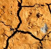 A сломало песок и лишайники звезды сухие Стоковые Фото