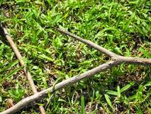 Сломленная ветвь на зеленой траве Стоковая Фотография RF