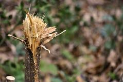 сломленная древесина Стоковые Фото