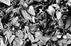 Сломленная текстура seashells Стоковое Изображение RF