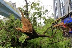 Сломленное большое дерево Стоковое Изображение RF