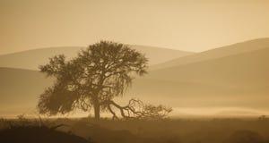 Сломленное дерево лимба silhouetted против дюн пустыни тона sepia намибийских. стоковые изображения rf