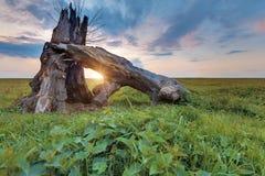 Сломленное дерево на заходе солнца стоковое фото rf