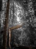 Сломленное дерево Стоковая Фотография RF