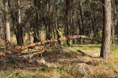 Сломленное дерево Стоковое Фото