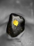 Сломленные лист от дерева клена на камнях базальта в запачканной воде Стоковая Фотография RF