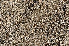 Сломленные раковина и Pebble Beach Стоковое фото RF