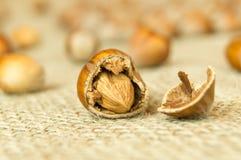 сломленный грецкий орех Стоковые Изображения RF