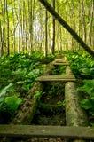 Сломленный мост в древесинах Стоковые Изображения