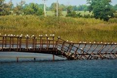 Сломленный мост с чайками Стоковое Изображение RF