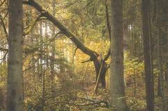 Сломленный дуб стоковое изображение