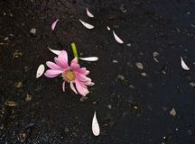Сломленный цветок стоковое фото