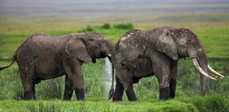2 слона в саванне вышесказанного Кения Танзания serengeti Maasai Mara стоковое изображение rf