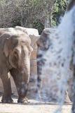 2 слона в солнечном свете Стоковое Фото