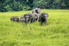 Слоны Азия стоковые фотографии rf