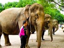 Слоны выровнянные до радушных толп Стоковая Фотография