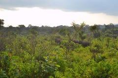 Слоны в одичалом - 3511 Стоковые Изображения RF