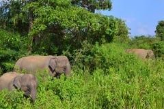 Слоны в одичалом - 3450 Стоковое фото RF