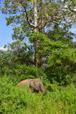 Слоны в одичалом - 3433 Стоковые Фотографии RF