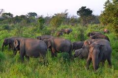 Слоны в одичалом - 3601 Стоковые Фото