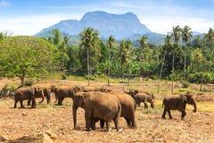 Слоны в парке стоковое изображение rf