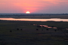 Слоны захода солнца на саванне стоковое фото rf