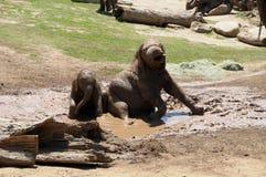 Слоны играя в грязи Стоковое Изображение