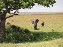 Слоны ища тень Стоковое Изображение RF
