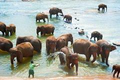 Слоны купая, Шри-Ланка Стоковые Изображения