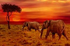 Слоны на предпосылке захода солнца стоковое изображение