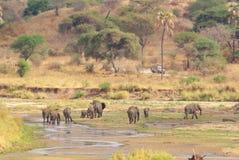 Слоны на реке Стоковые Фото
