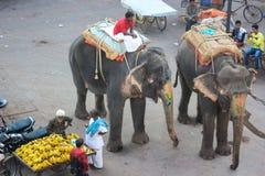 Слоны на улице Индии Стоковая Фотография