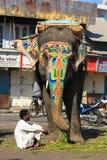 Слоны на улице Индии Стоковое Фото
