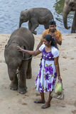 Слоны от детского дома слона Pinnawela ослабляют на банке реки Maha Oya в Шри-Ланке Стоковое Фото