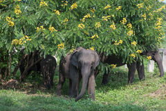 слоны одичалые Стоковые Фотографии RF