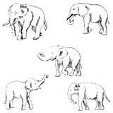Слоны эскиз вручную белизна вала карандаша чертежа предпосылки стоковое изображение