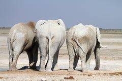 Слоны Стоковое фото RF