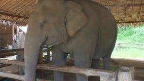 Слоны видеоматериал