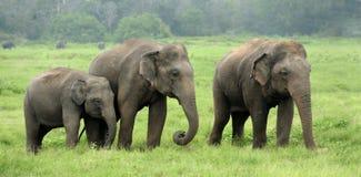 Слоны стоковое изображение rf