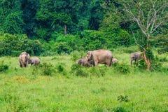 Слон Азия (голодные мыши) Стоковое фото RF