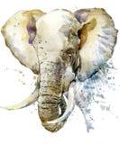 Слон Акварель иллюстрации слона Стоковое Изображение RF