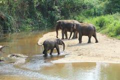 Слон брызгая с водой Стоковое Изображение
